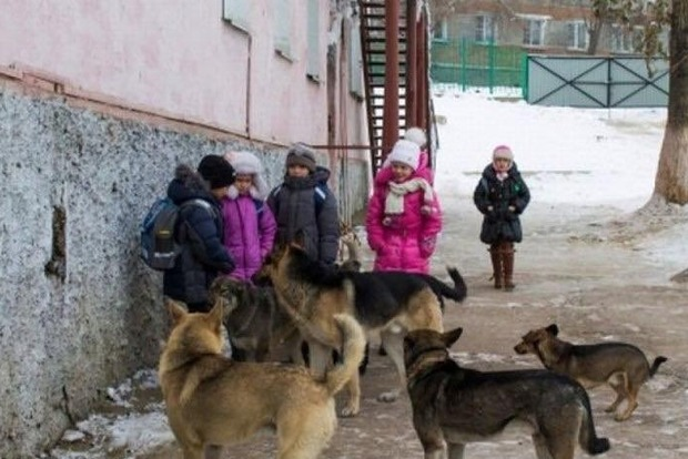 Собаки изуродовали 6-летнюю девочку в Одесской области