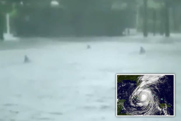Жители Майами боятся выйти из дому: в затопленном городе плавают акулы