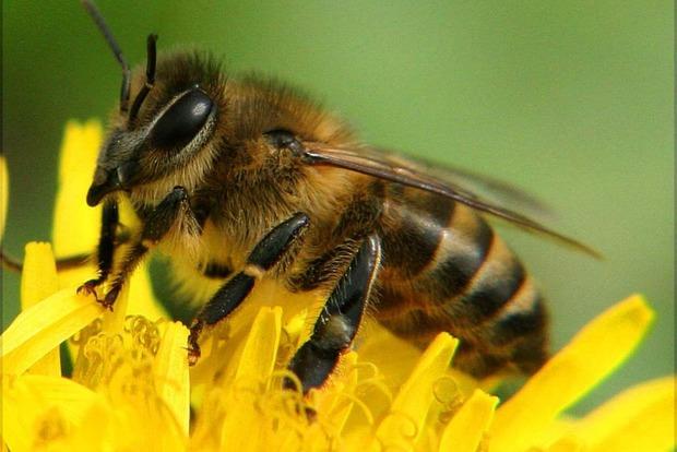 Проводник пытался провезти через границу пчел (видео)