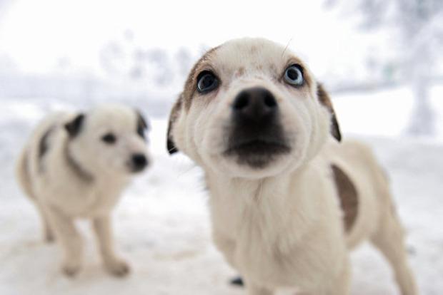 Определена неожиданная польза от домашних животных