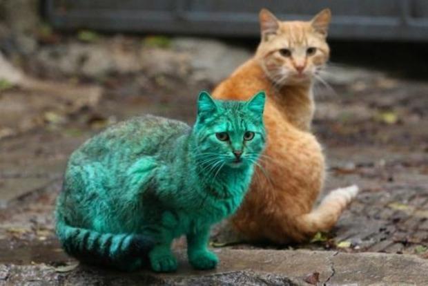 Зеленый кот из Болгарии - новая звезда Сети