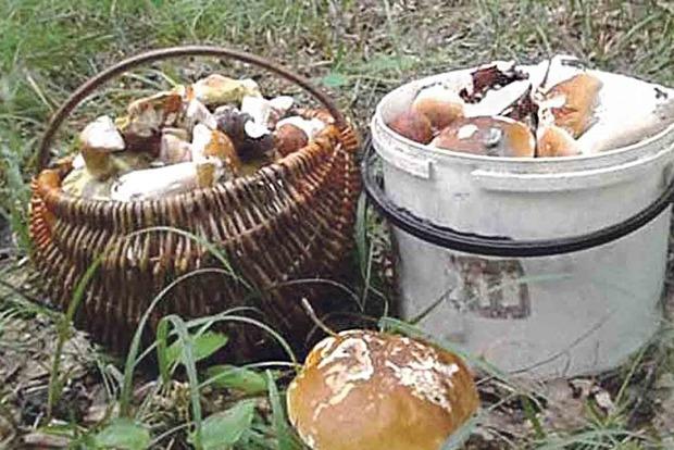 В Винницких лесах зафиксировано аномальное количество грибов