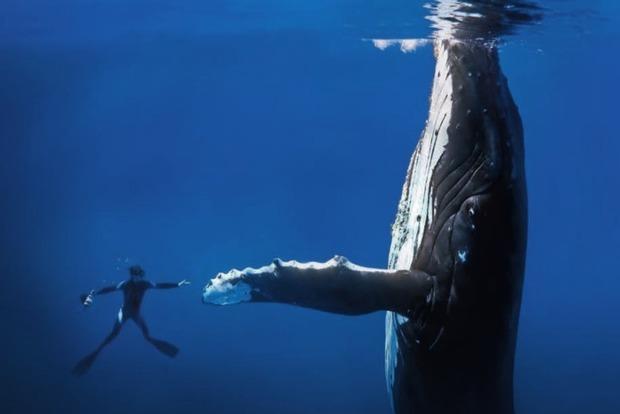 Девять самых больших рыболовных компаний мира начали борьбу с браконьерами и загрязнением океана