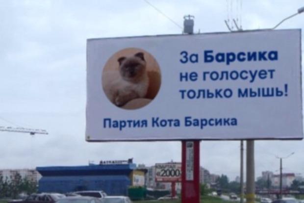 Кот Барсик из Барнаула будет баллотироваться в президенты РФ