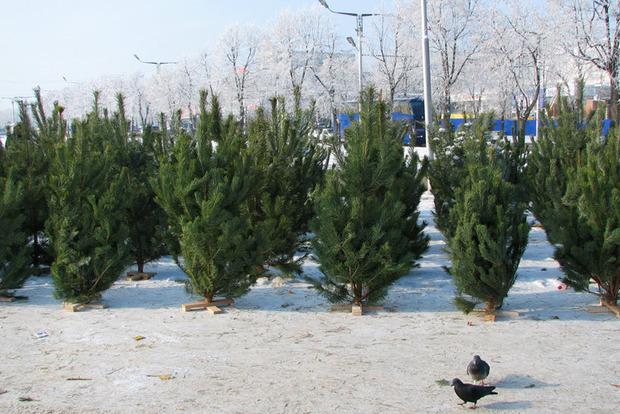 Готовь игрушки игирлянды: вУкраинском государстве стартовали официальные продажи новогодних елок