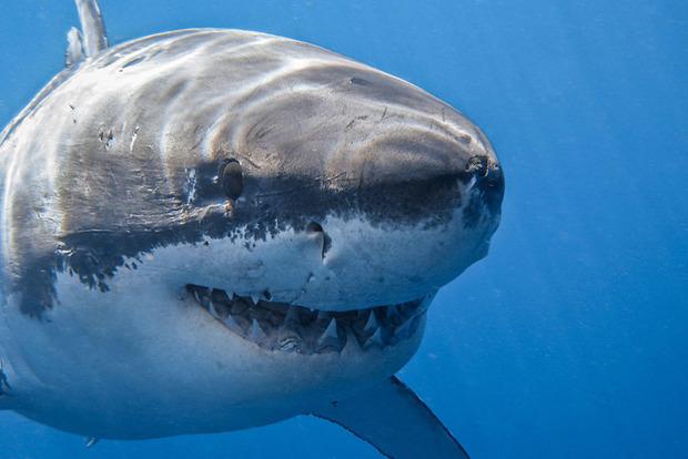Шокирующий случай: аквалангист столкнулся с акулой