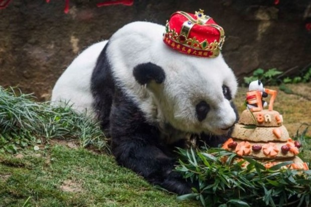 ВКитайской республике скончалась старейшая вмире панда