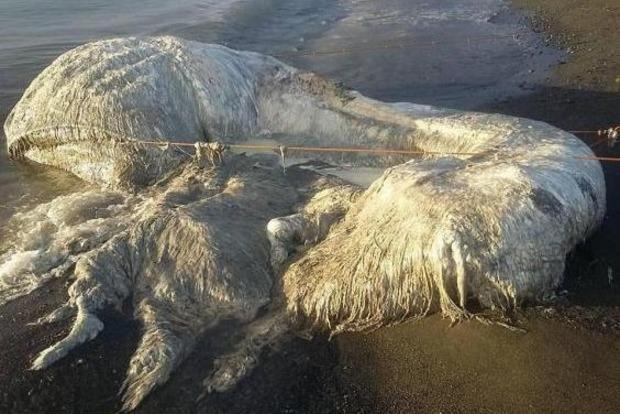 На Філіппінах знайдено шестиметрового волосатого монстра. Фото
