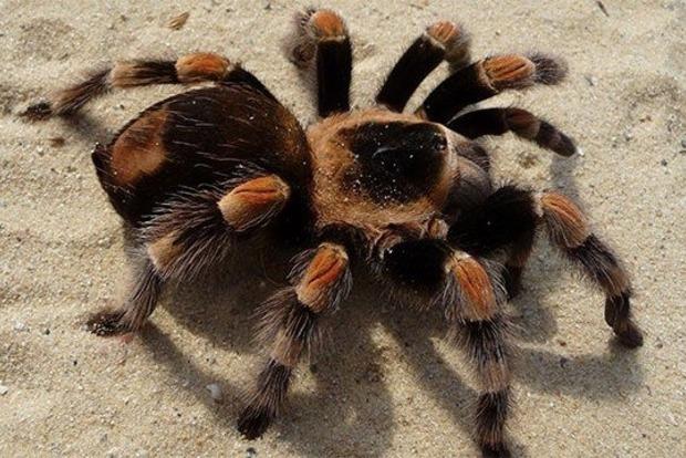Китай будет бороться с бедностью пауками