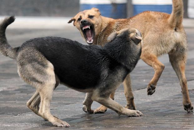 В Киеве бездомные собаки нападают на людей