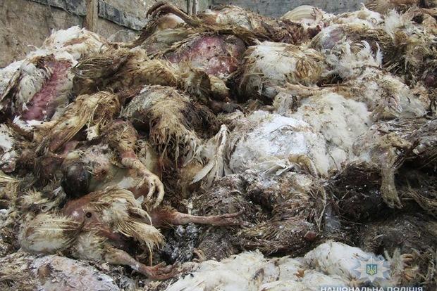 Нічого не змінюється: птахофабрики і далі закопують мертвечину в лісах і полях