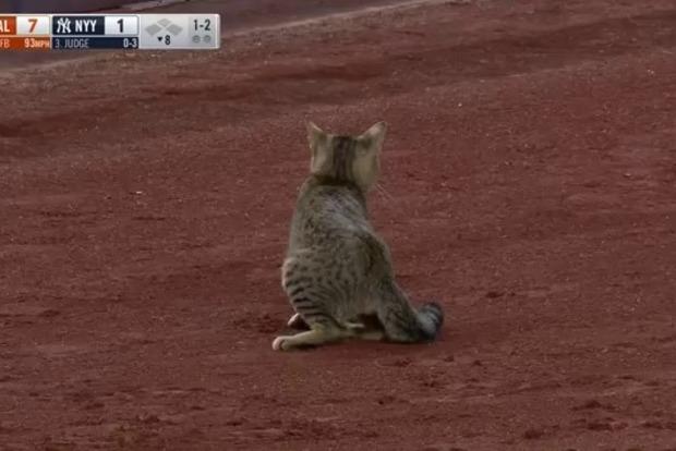 Герой дня: кот прервал бейсбольный матч в Нью-Йорке