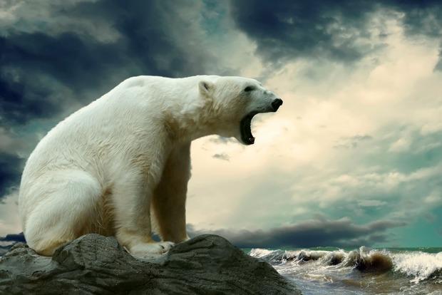 Белый медведь забрался на склад, съел припасы и застрял в окне, видео