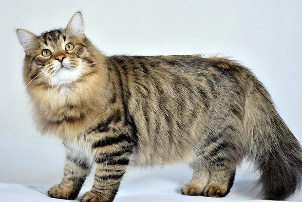 Сотрудникам IT-компании в Японии разрешили приносить на работу домашних котов