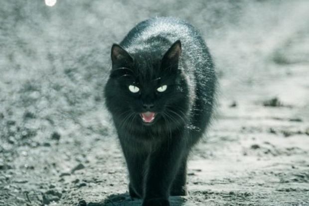 Як зробити чорну кішку, яка перебігла дорогу, символом удачі