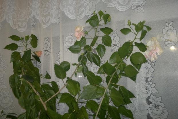 Цветы-мужегоны: какие растения разрушают семейное счастье