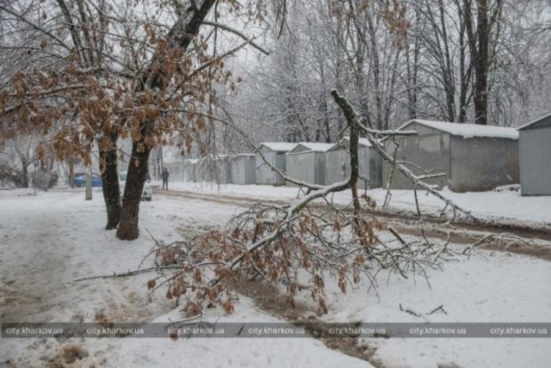 В Харькове снегопад повалил более полутысячи деревьев