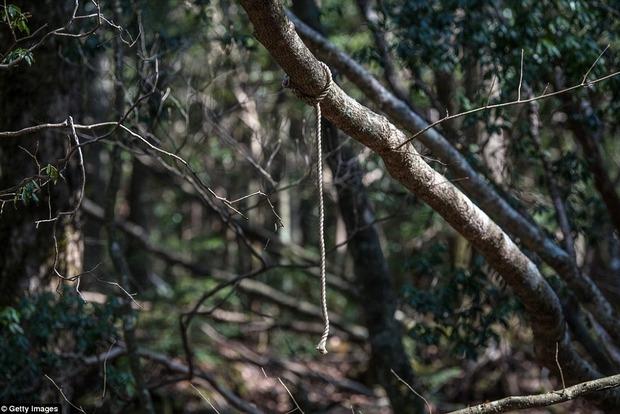 Аокигахара. Жуткие фото леса самоубийств в Японии