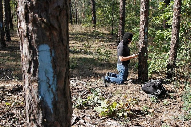 За убийство семьи лосей на Черниговщине браконьер отделался небольшим штрафом