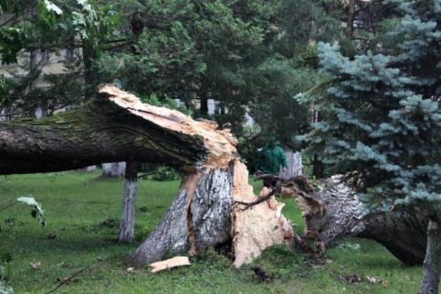 Ураган в Закарпатье нанес убытки на сумму более 75 млн грн