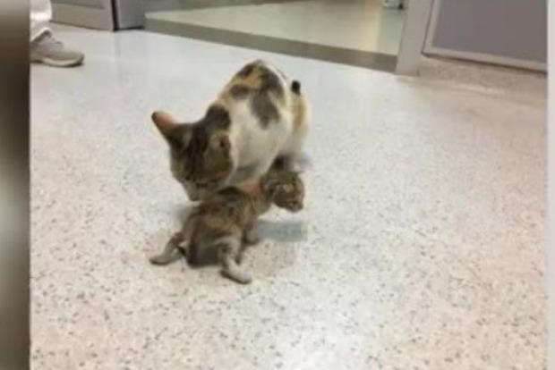 Помогите! Кошка принесла в зубах больного котенка вклинику