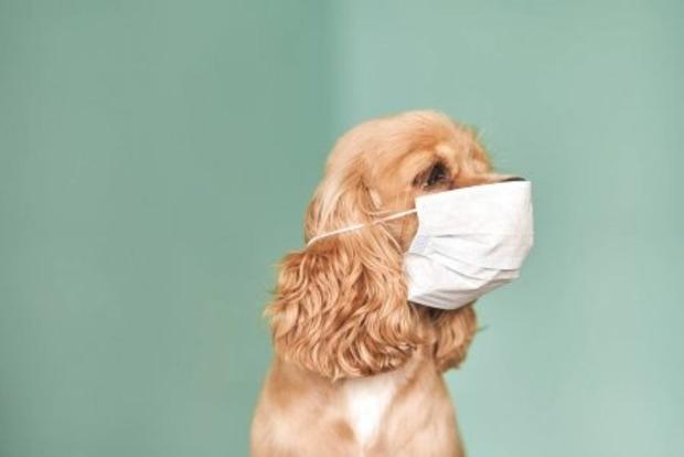 ВОЗ пересмотрела свои рекомендации относительно медицинских масок