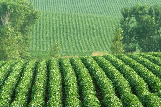 Скандальная поправка в Налоговый кодекс ведет к росту теневого рынка сои и рапса