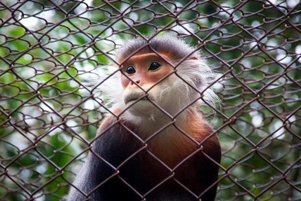 Вьетнам привезет в Россию еще больше обезьян