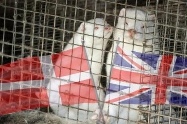 Британия закрыла авиасообщение с Данией из-за нового штампа коронавируса выявленного на норковых фермах