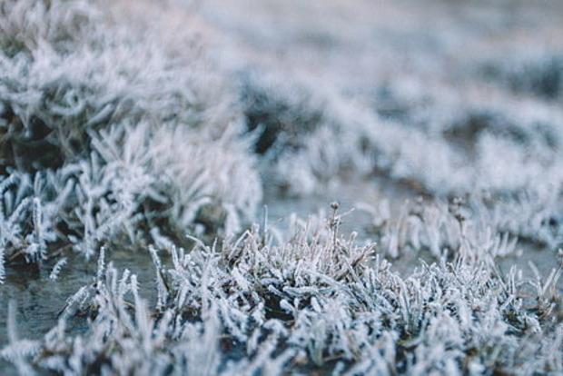 В Украине ожидаются заморозки до минус трех