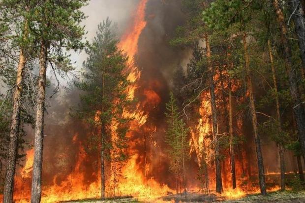 Потерявшийся в лесу Черногории поляк, поджег лес ради спасения