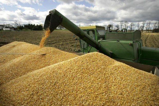 Дожди в июле были малоэффективны: эксперт сделала неутешительный прогноз урожая зерновых