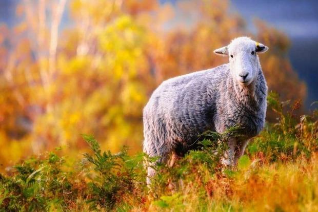 11 ноября: какой праздник, что запрещено, что надо одеть на удачу и при чем тут овцы?