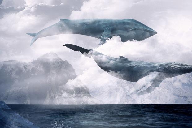 В Голой Пристани дети 6-11 классов все больше вовлекаются в смертельную игру «Синий кит»