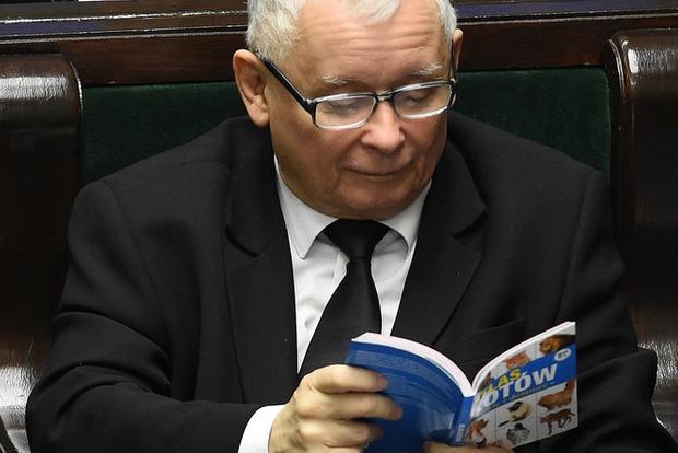 Любимую книгу Качиньского про котиков купили за рекордную сумму