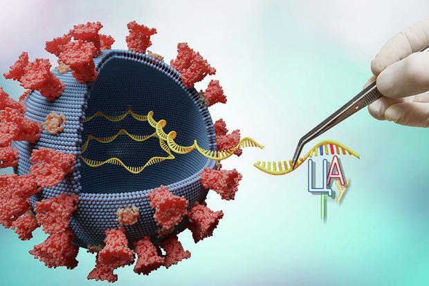 Какие штаммы коронавируса самые опасные и как они проявляются