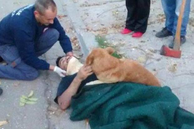 В Аргентине собака обнимала мужчину до тех пор, пока не прибыла «скорая»