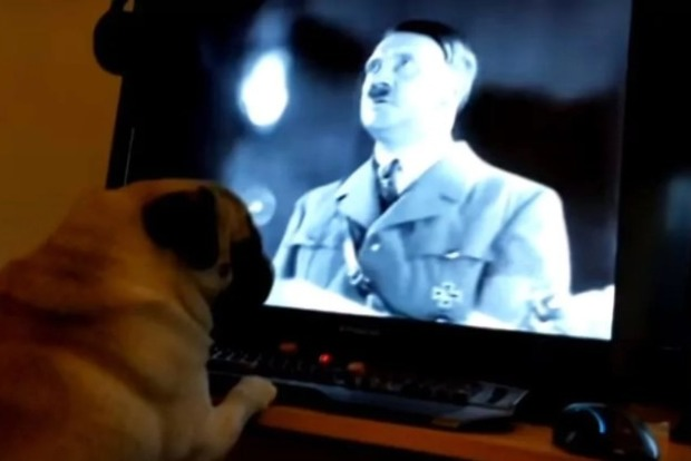 Собака не виновата. Британец попал под суд, после того как научил мопса