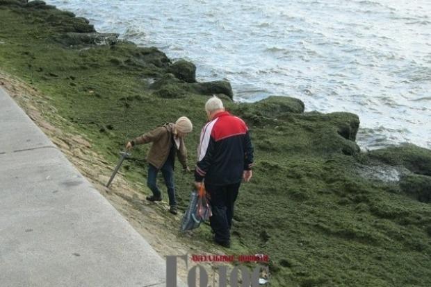 Берег Азовского моря неожиданно покрылся толстым ковром водорослей