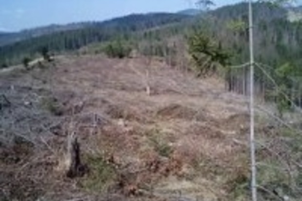 Бизнесмены Ивано-Франковской области незаконно экспортировали лес на сумму более девяти миллионов гривен