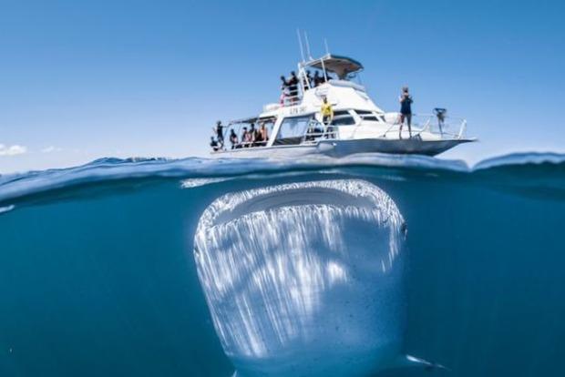 Китовая акула едва не проглотила лодку с туристами