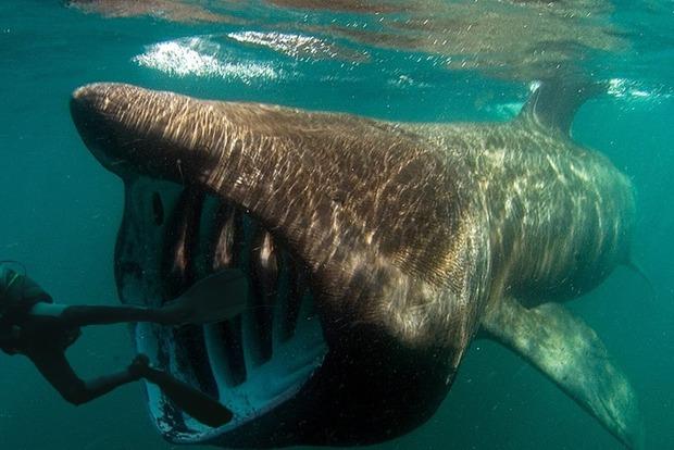 Дайверы случайно сняли акулу-сатану