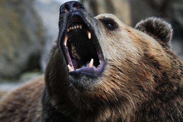 Под Харьковом медведь покалечил уборщицу на базе отдыха
