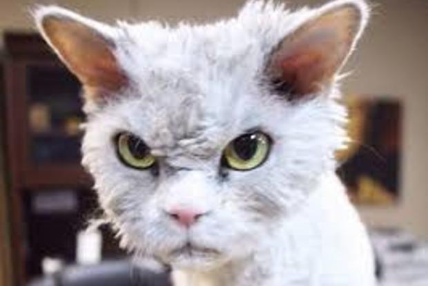 В Киеве случилось эпичное ДТП из-за слабонервного кота