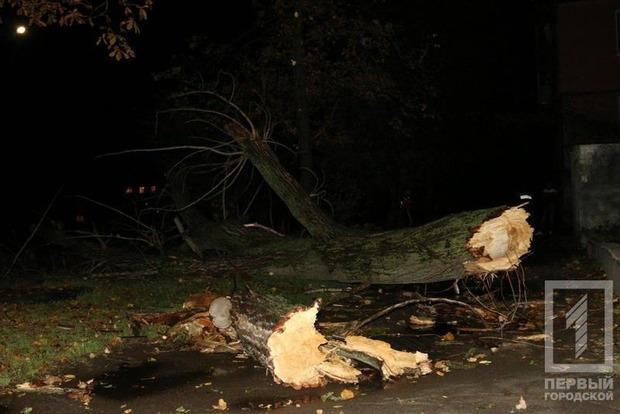 Огромное дерево убило криворожанина во время бури