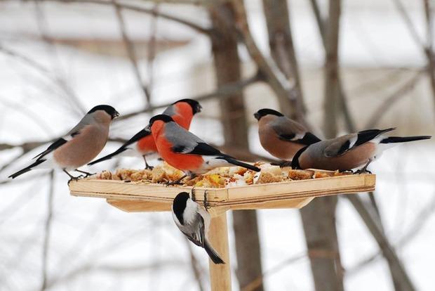 Орнитологи прогнозируют массовую гибель птиц в Днепропетровской области