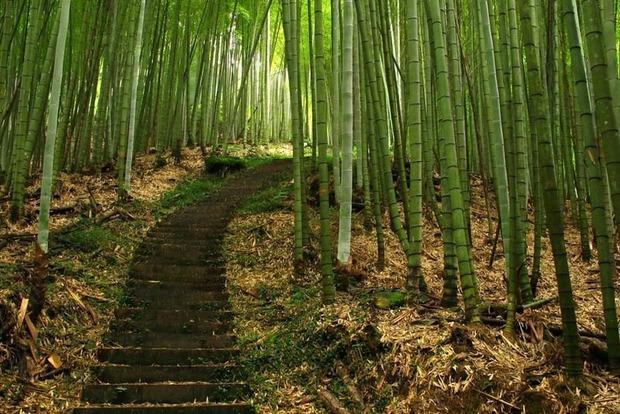 Китаєць заробив статок, наливаючи горілку в бамбук