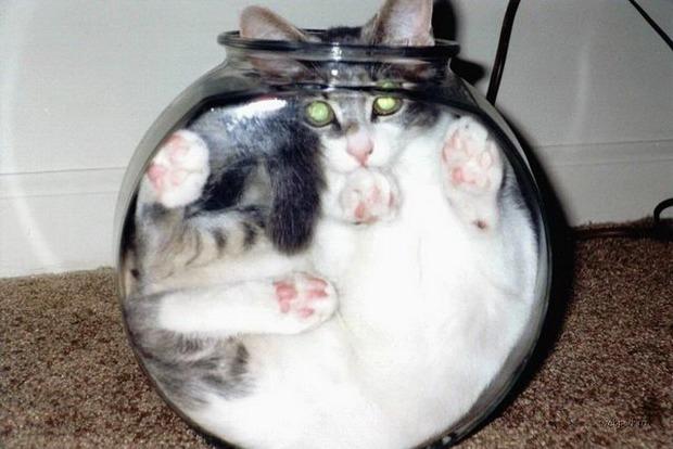 Ученый доказал, что коты - это жидкость, и получил Шнобелевскую премию