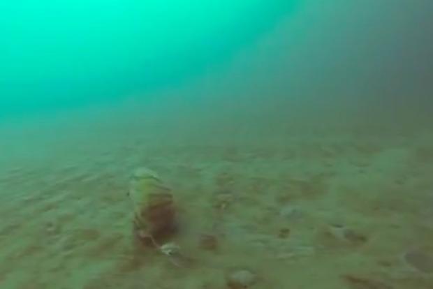 Редкую арктическую медузу засняли накамеру