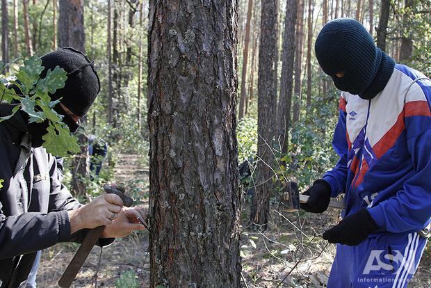 Активисты нашпиговали деревья гвоздями, протестуя против их вырубки в Пуща-Водице